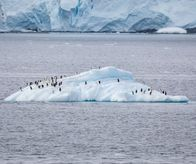Penguins on icefloe at Errera Channel (Antarctica)