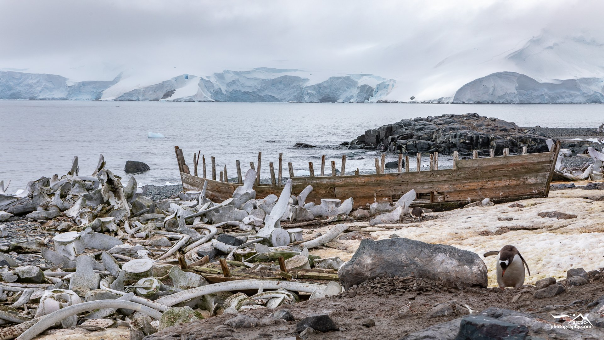 Ship wreck and whale bones at Mikkelsen Harbour, D´Hainhaut Island